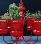 3 Easy Tips for Urban Gardening