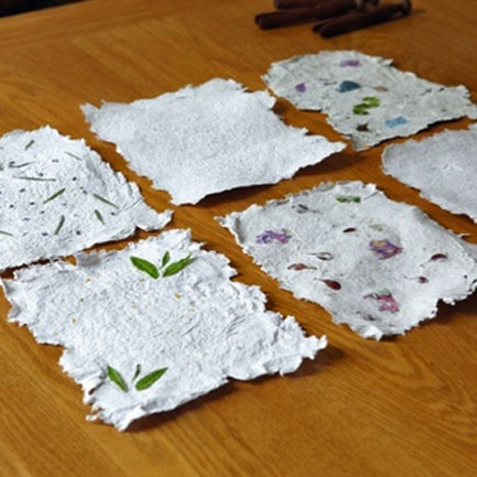 Making Paper with Wildflower Seeds