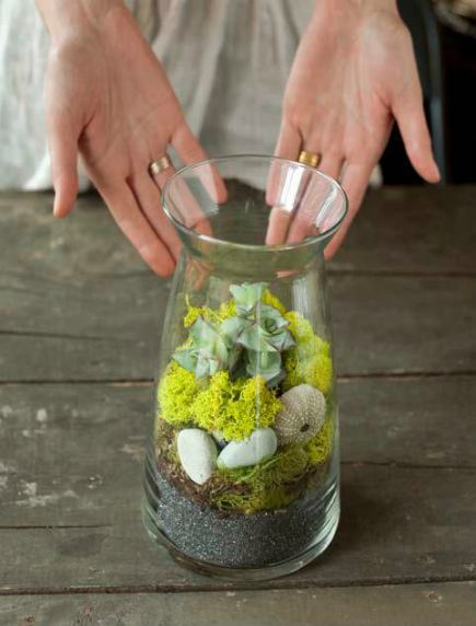 Glass Terrarium with Succulent and Woodsy Plants