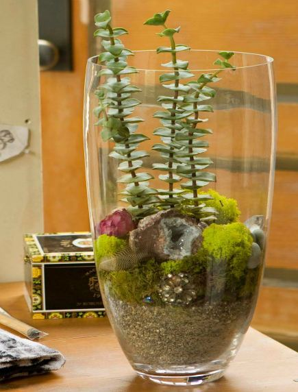Terrarium with Plants and Grandma's Jewels