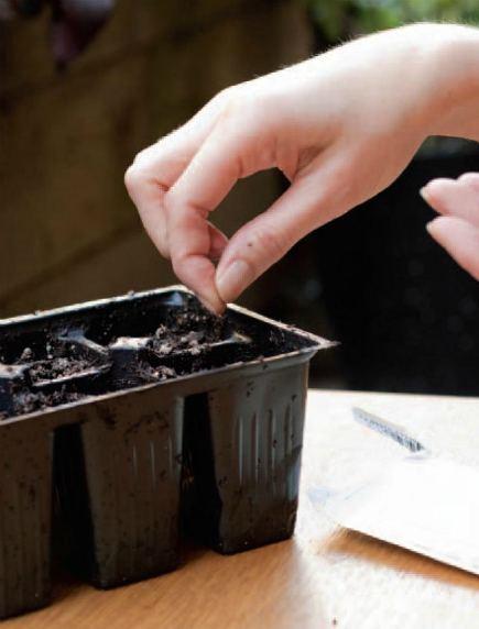 Sowing Seeds Indoors and Outdoors