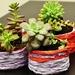 Holiday Tin Succulent Garden