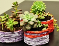 Holiday Tin Succulent Garden