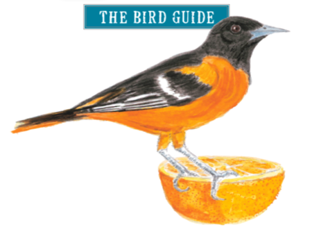 Seasonal Treats: A Bird-Feeding Recipe