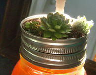 Mason Jar Craft - Succulent Soap Dispenser