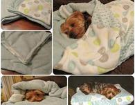 Doggie Snuggle Sack (Free Sewing Pattern)