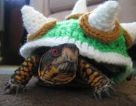 Bowser Sweater for a Turtle