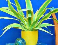 Fabulous Fabric Plant