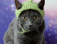 Knitted Alien Cat Hat (Free Knitting Pattern)