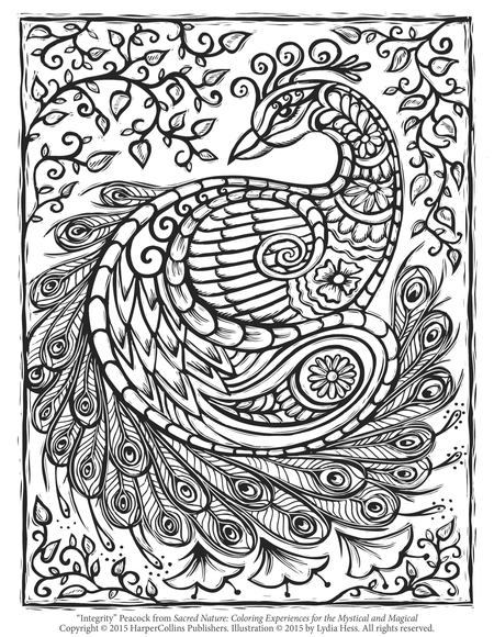 Free Peacock Adult Coloring Page Craftfoxes