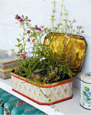 Miniature Garden in a Pretty Vintage Tin