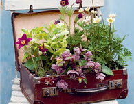 Upcycle a Vintage Suitcase into a Garden