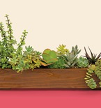 Succulent Window Box for Sunny or Shady Spaces
