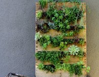 Vertical Succulent Garden from a Wood Pallet