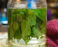 mint vodka infusion