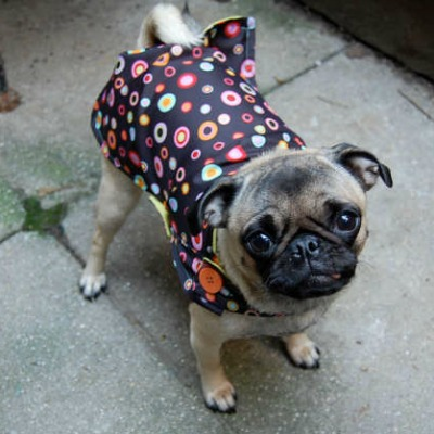 upcycle an umbrella into a dog raincoat