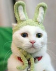 cat in pet costume craft
