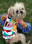 dog in pet costume craft