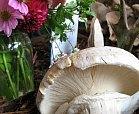mushroom fesitval