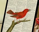 bird on dictionary page christmas gift