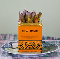 Tea tin with succulent plant.