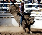 Bull riding at the World