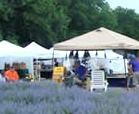 Lavender Festival tents at the Ol