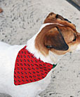 pet craft bandana