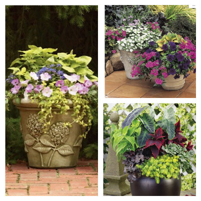 Four Seasons Container Garden