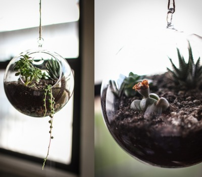 succulent plants, succulent garden, hanging terrarium, apartment decor