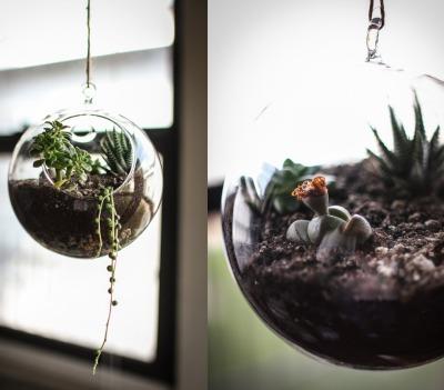 succulent plants, succulent garden, hanging terrarium, apartment decor