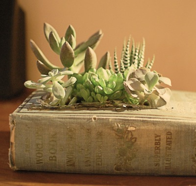 book crafts, succulent plants, repurpose book
