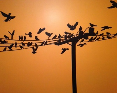 Birds on Telephone Pole Wall Mural