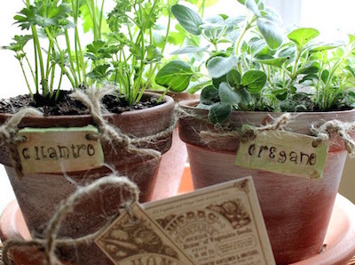 DIY Clay Plant Markers, Plant Markers for Indoor Gardens, Indoor Gardening Projects