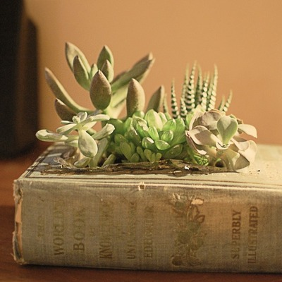 Indoor Gardening Projects, Succulent Garden Ideas, DIY Succulent Planters