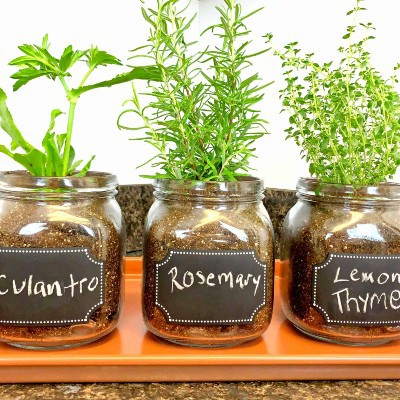 Mason Jar Gardening, Beginner Gardening Crafts, DIY Window Herb Planters