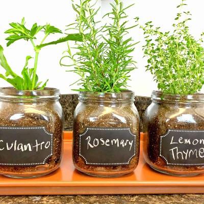 Mason Jar Gardening, Beginner Gardening Crafts, DIY Window Herb Planters