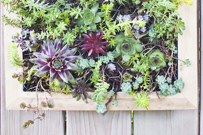 DIY mounted frame garden