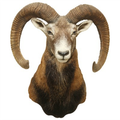 Ram Head Wall Decal