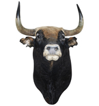 Spanish Fighting Bull Mount Vinyl Wall Decal
