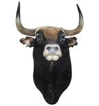 Spanish Fighting Bull Mount Vinyl Wall Decal