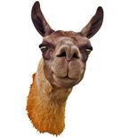 Llama Mount Decal