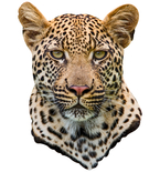 Leopard Mount Vinyl Wall Decal