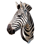 Zebra Mount Vinyl Wall Decal