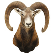 Ram Head Wall Vinyl Wall Decal