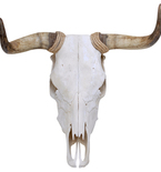 Spanish Fighting Bull Skull Mount Vinyl Wall Decal