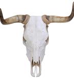 Spanish Fighting Bull Skull Mount Vinyl Wall Decal