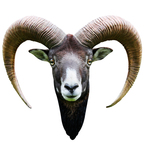 Long Horned Goat Mount Vinyl Wall Decal