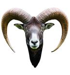 Long Horned Goat Mount Vinyl Wall Decal