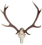 Deer Skull Vinyl Wall Decal
